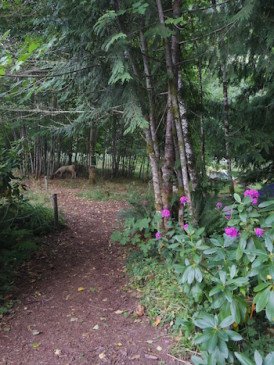 path to wooded camp
